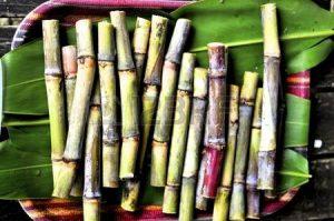 12411846-サトウキビは砂糖、ラム酒やバイオ燃料の生産のためだけカットします。